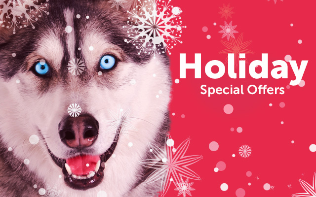 holiday-special-offer-2013-email